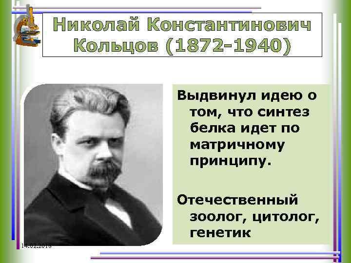 Николай Константинович Кольцов (1872 -1940) Выдвинул идею о том, что синтез белка идет по