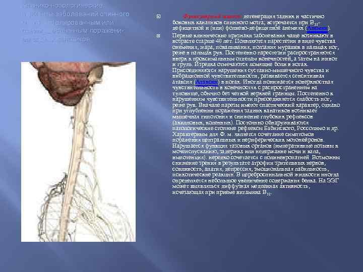 Клинико-нозологические варианты заболеваний спинного мозга с изолированным или преимущественным поражением задних канатиков Фуникулярный миелоз-
