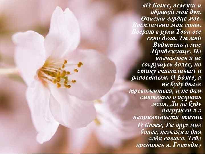 «О Боже, освежи и обрадуй мой дух. Очисти сердце мое. Воспламени мои силы.