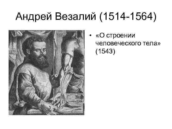 Андрей Везалий (1514 -1564) • «О строении человеческого тела» (1543)