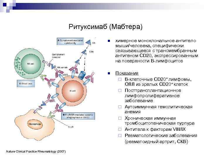 Ритуксимаб (Мабтера) n n Nature Clinical Practice Rheumatology (2007) химерное моноклональное антитело мыши/человека, специфически