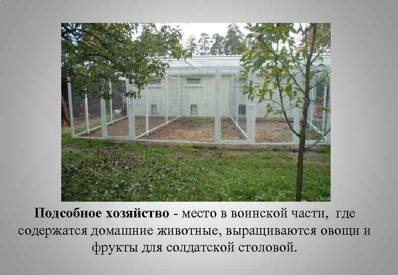 Подсобное хозяйство - место в воинской части, где содержатся домашние животные, выращиваются овощи и