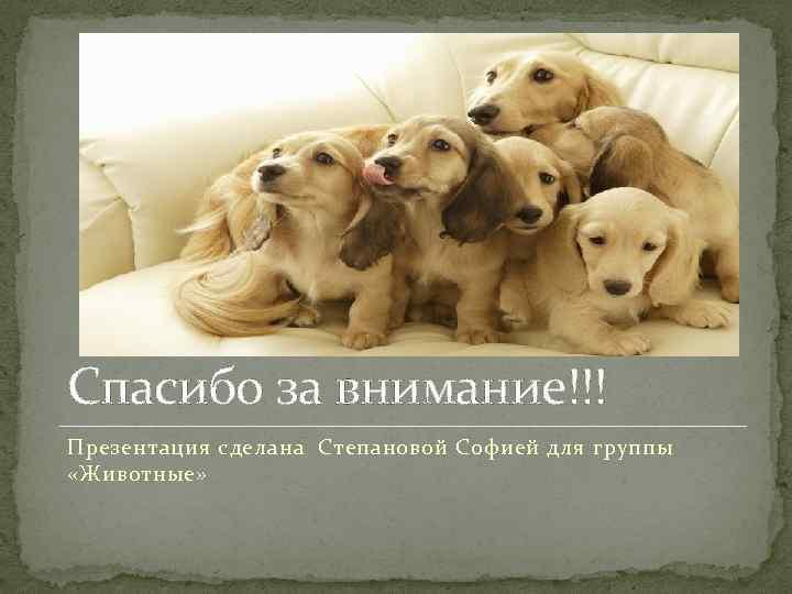 картинка собаки спасибо за внимание отправляются
