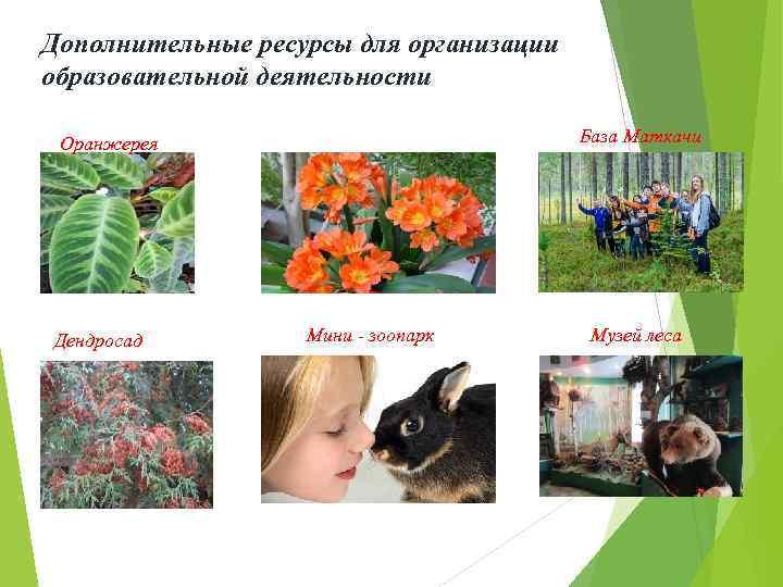Дополнительные ресурсы для организации образовательной деятельности База Маткачи Оранжерея Дендросад Мини - зоопарк Музей