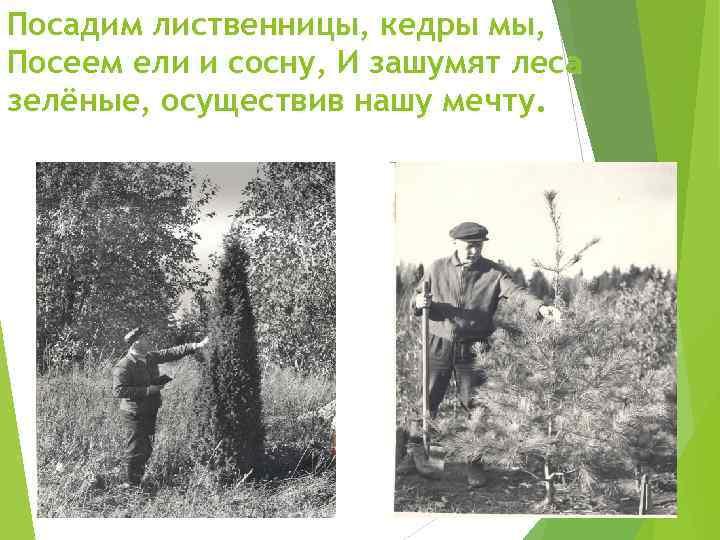 Посадим лиственницы, кедры мы, Посеем ели и сосну, И зашумят леса зелёные, осуществив нашу