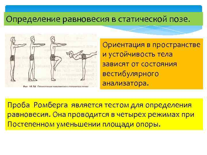 Определение равновесия в статической позе. Ориентация в пространстве и устойчивость тела зависят от состояния