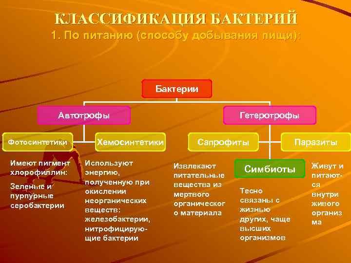 КЛАССИФИКАЦИЯ БАКТЕРИЙ 1. По питанию (способу добывания пищи): Бактерии Автотрофы Фотосинтетики Имеют пигмент хлорофиллин: