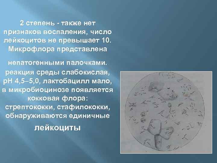 2 степень - также нет признаков воспаления, число лейкоцитов не превышает 10. Микрофлора представлена