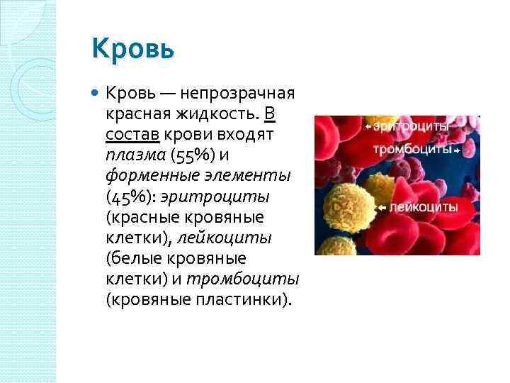 Кровь — непрозрачная красная жидкость. В состав крови входят плазма (55%) и форменные элементы