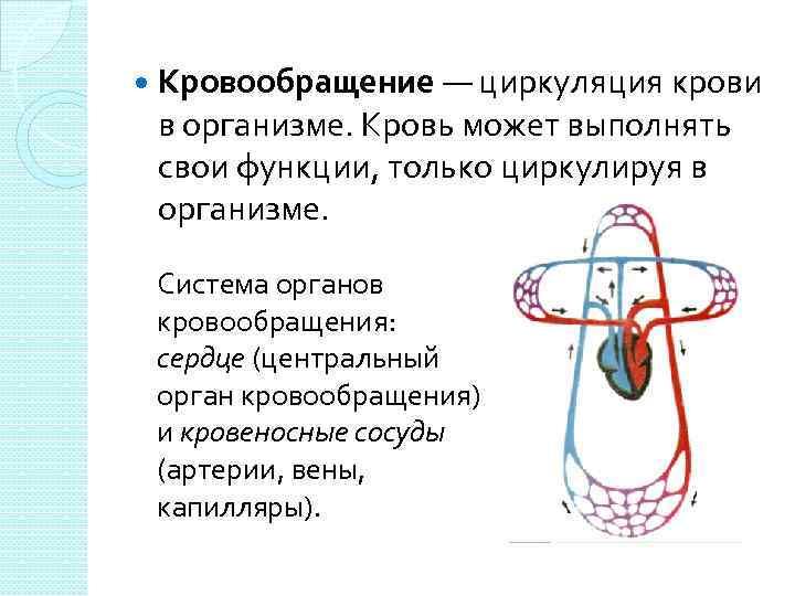 Кровообращение — циркуляция крови в организме. Кровь может выполнять свои функции, только циркулируя