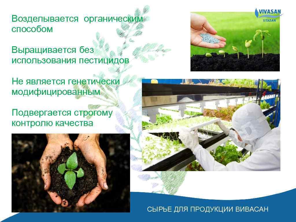 Возделывается органическим способом Выращивается без использования пестицидов Не является генетически модифицированным Подвергается строгому контролю