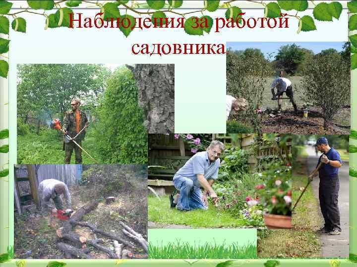Наблюдения за работой садовника