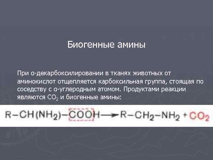 Биогенные амины При α-декарбоксилировании в тканях животных от аминокислот отщепляется карбоксильная группа, стоящая по