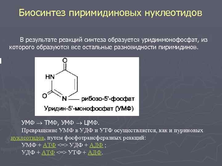 Биосинтез пиримидиновых нуклеотидов В результате реакций синтеза образуется уридинмонофосфат, из которого образуются все остальные