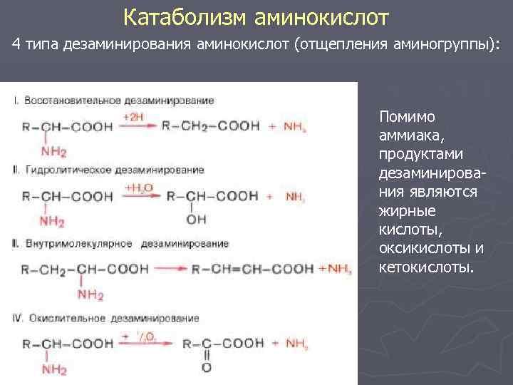 Катаболизм аминокислот 4 типа дезаминирования аминокислот (отщепления аминогруппы): Помимо аммиака, продуктами дезаминирования являются жирные