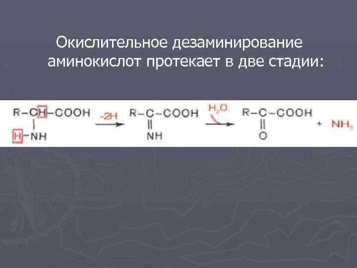 Окислительное дезаминирование аминокислот протекает в две стадии: