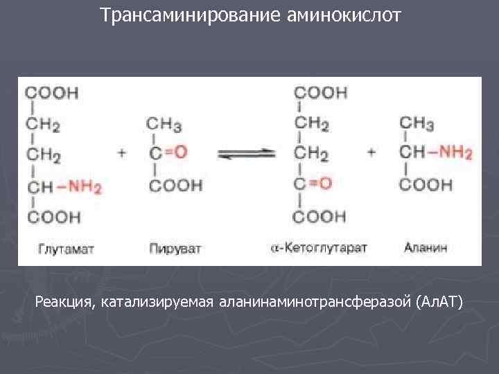 Трансаминирование аминокислот Реакция, катализируемая аланинаминотрансферазой (Ал. АТ)