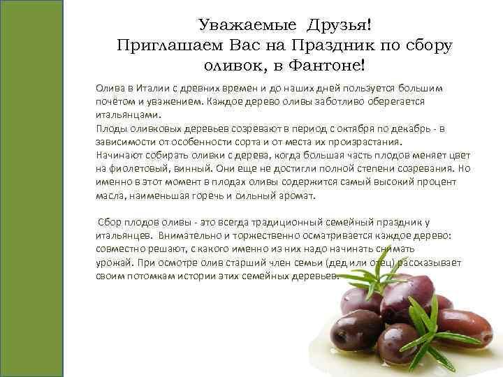 Уважаемые Друзья! Приглашаем Вас на Праздник по сбору оливок, в Фантоне! Олива в Италии