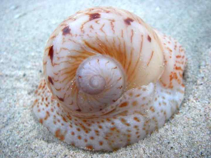 Моллюски виды картинки