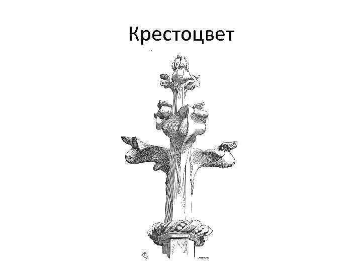 Крестоцвет