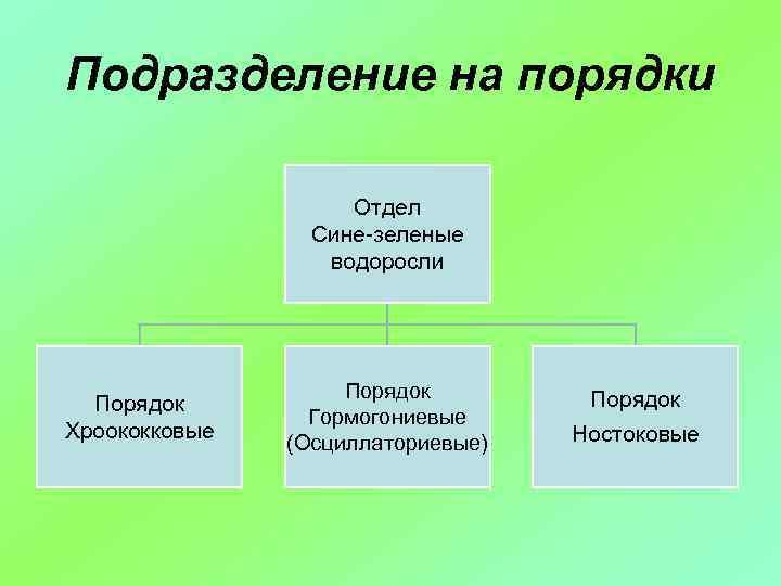 Подразделение на порядки Отдел Сине-зеленые водоросли Порядок Хроококковые Порядок Гормогониевые (Осциллаториевые) Порядок Ностоковые