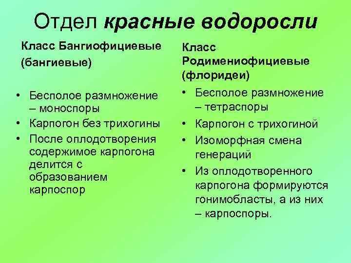 Отдел красные водоросли Класс Бангиофициевые (бангиевые) • Бесполое размножение – моноспоры • Карпогон без