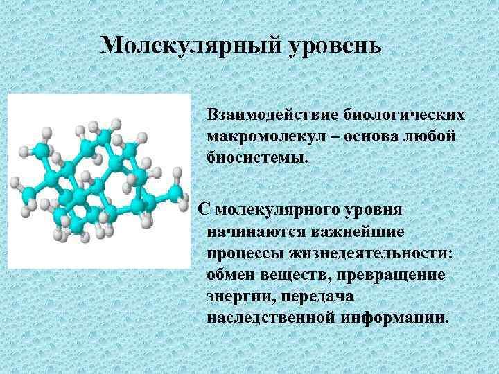 Молекулярный уровень Взаимодействие биологических макромолекул – основа любой биосистемы. С молекулярного уровня начинаются важнейшие