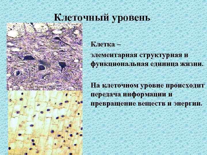 Клеточный уровень Клетка – элементарная структурная и функциональная единица жизни. На клеточном уровне происходит