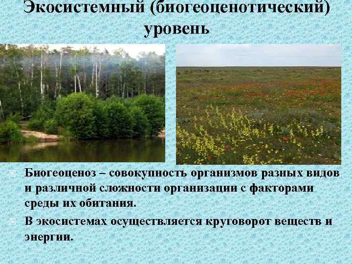 Экосистемный (биогеоценотический) уровень Биогеоценоз – совокупность организмов разных видов и различной сложности организации с