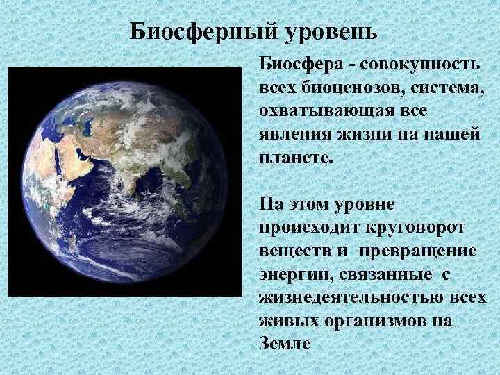 Биосферный уровень Биосфера - совокупность всех биоценозов, система, охватывающая все явления жизни на нашей