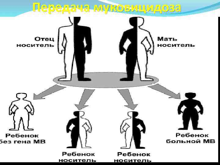 Передача муковицидоза