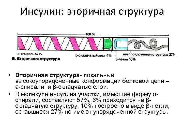 Инсулин: вторичная структура • Вторичная структура- локальные высокоупорядоченные конформации белковой цепи – a-спирали и