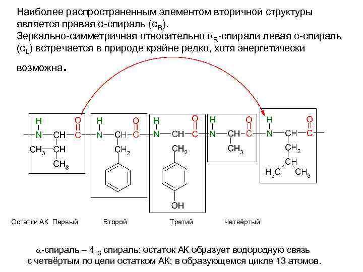 Наиболее распространенным элементом вторичной структуры является правая α-спираль (αR). Зеркально-симметричная относительно αR-спирали левая α-спираль