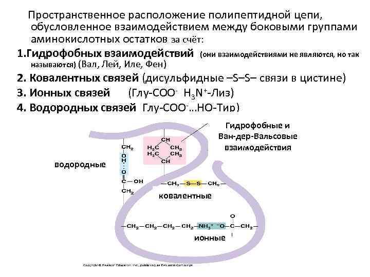 Пространственное расположение полипептидной цепи, обусловленное взаимодействием между боковыми группами аминокислотных остатков за счёт: 1.