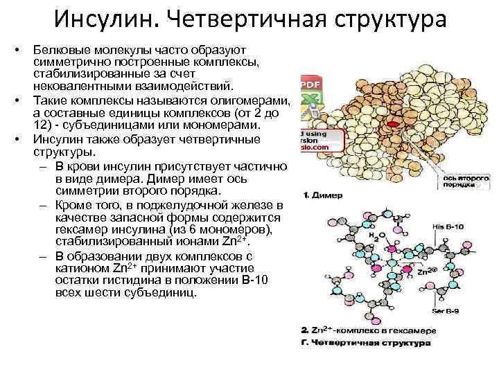 Инсулин. Четвертичная структура • • • Белковые молекулы часто образуют симметрично построенные комплексы, стабилизированные
