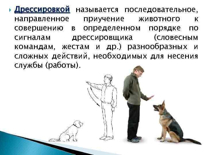 Жесты в дрессировке собак в картинках