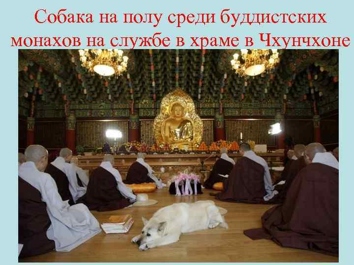 Собака на полу среди буддистских монахов на службе в храме в Чхунчхоне