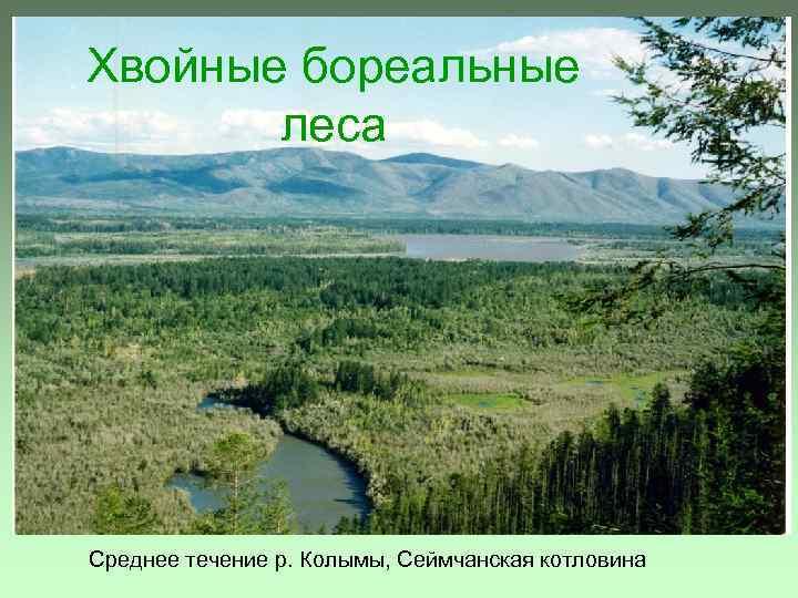 Хвойные бореальные леса Среднее течение р. Колымы, Сеймчанская котловина