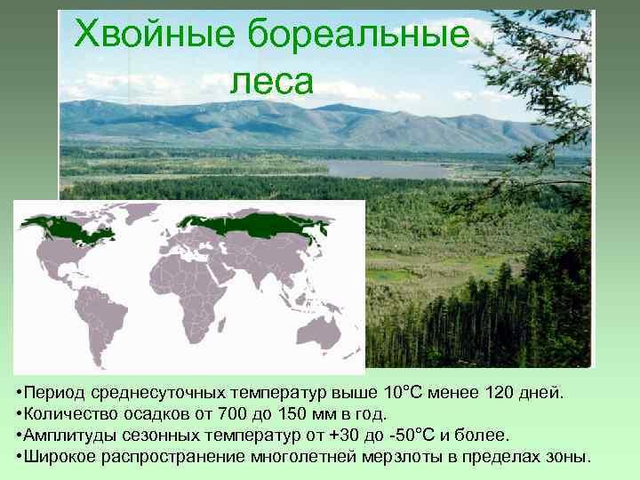 Хвойные бореальные леса • Период среднесуточных температур выше 10°С менее 120 дней. • Количество