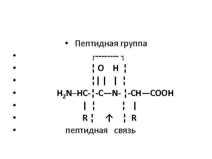 • • Пептидная группа ┌---- ┐ ¦ O H ¦ ¦| | |