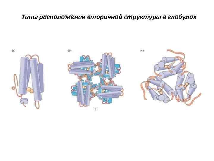 Типы расположения вторичной структуры в глобулах