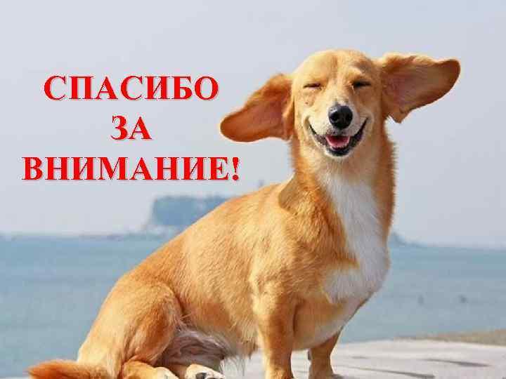 пригороде картинка собаки спасибо за внимание фототовары электрозаводская около