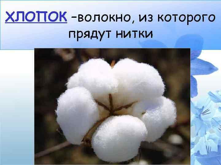 ХЛОПОК –волокно, из которого прядут нитки