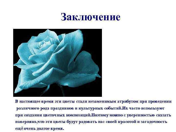 Заключение В настоящее время эти цветы стали незаменимым атрибутом при проведении различного рода праздников