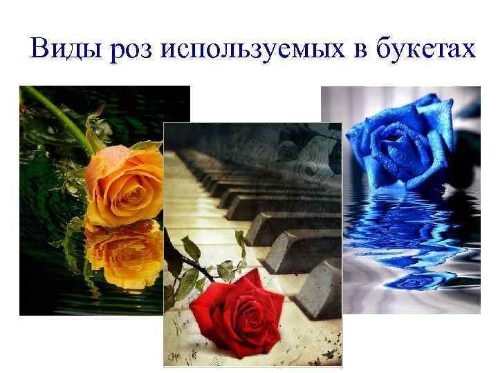 Виды роз используемых в букетах