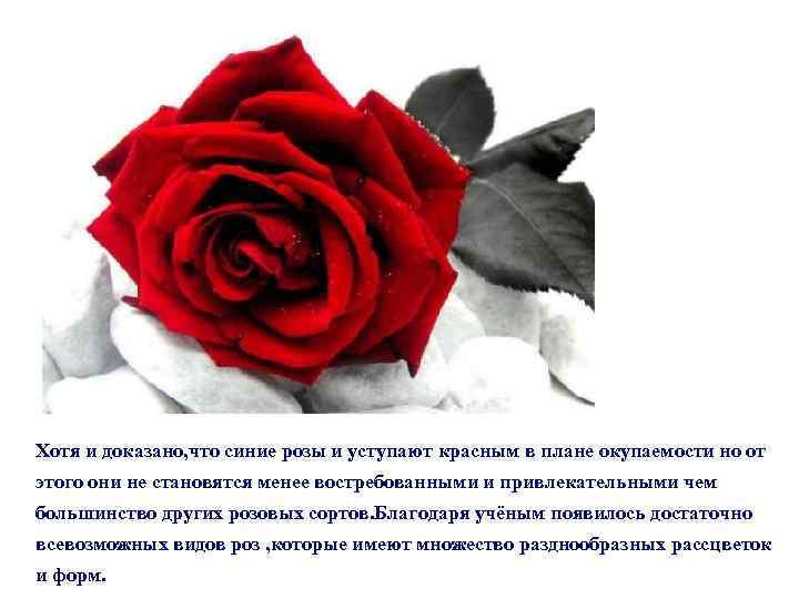 Хотя и доказано, что синие розы и уступают красным в плане окупаемости но от