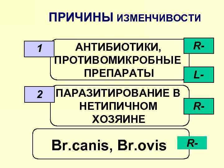 ПРИЧИНЫ ИЗМЕНЧИВОСТИ 1 2 АНТИБИОТИКИ, ПРОТИВОМИКРОБНЫЕ ПРЕПАРАТЫ ПАРАЗИТИРОВАНИЕ В НЕТИПИЧНОМ ХОЗЯИНЕ Br. canis, Br.