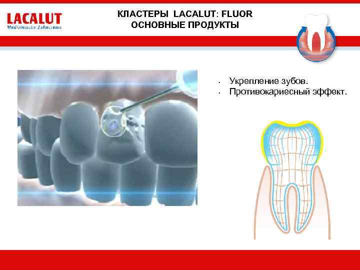 КЛАСТЕРЫ LACALUT: FLUOR ОСНОВНЫЕ ПРОДУКТЫ • • Укрепление зубов. Противокариесный эффект.