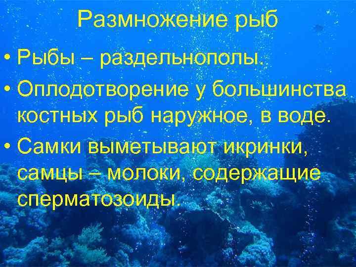 Размножение рыб • Рыбы – раздельнополы. • Оплодотворение у большинства костных рыб наружное, в