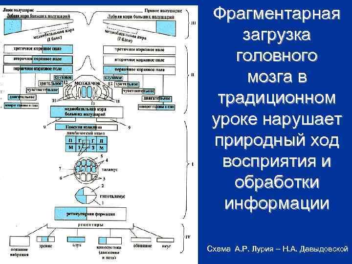 Фрагментарная загрузка головного мозга в традиционном уроке нарушает природный ход восприятия и обработки информации
